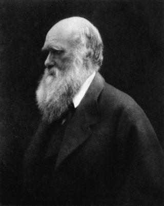 Charles_Darwin_by_Julia_Margaret_Cameron_2